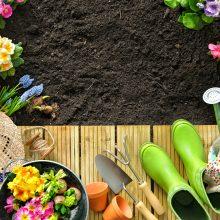 Spring Gardening 101