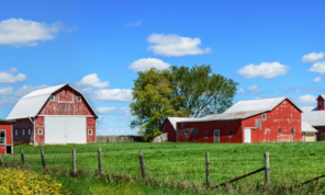Large Red Barns